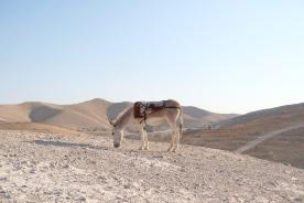 Wadi El Kelt, 2019